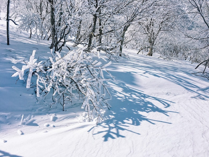 Snow2017 18 47