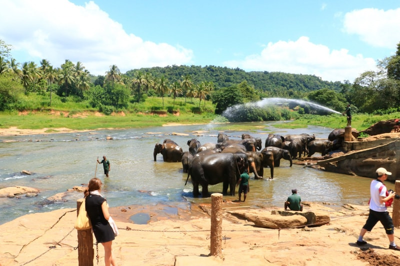 Srilanka solo travel 4