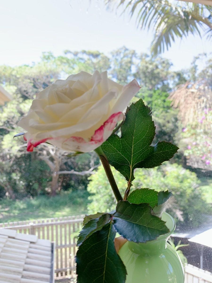 Australia slowlife 5花と緑